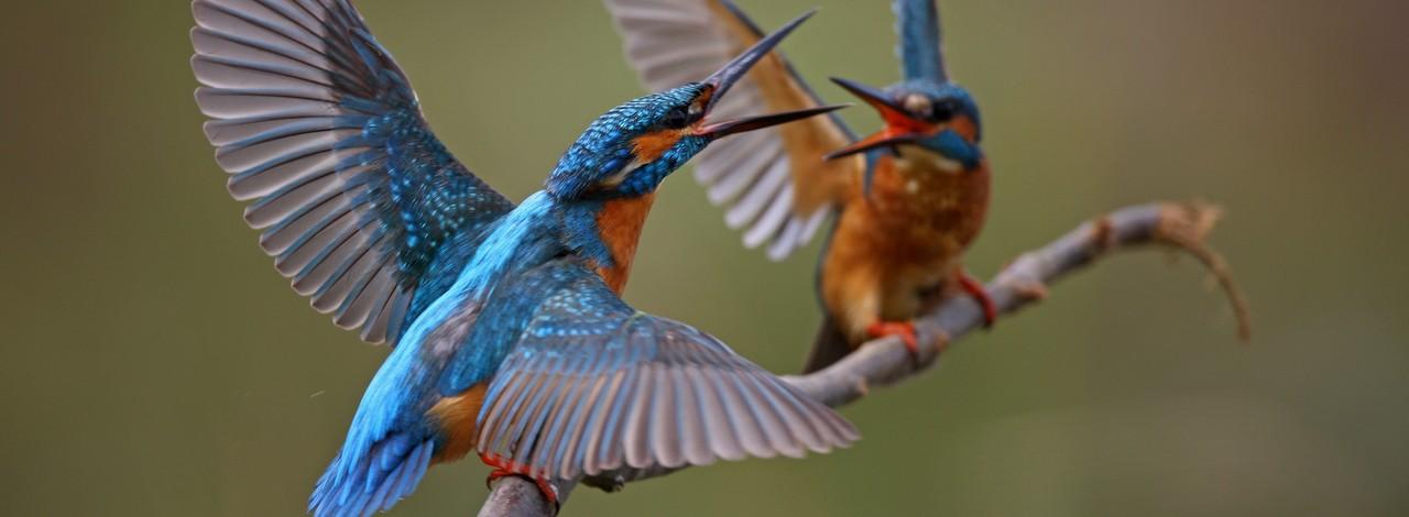 Dünya Kuş Gözlem Günü