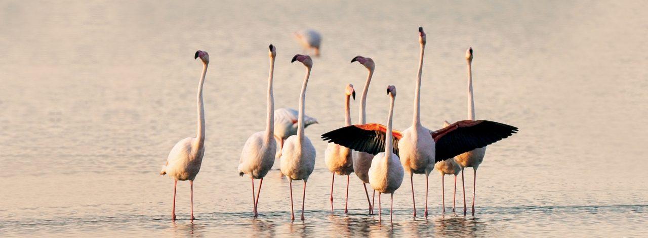 Flamingoların Dansına Yolculuk