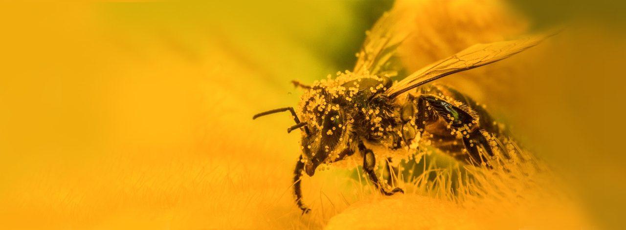 Yaşasın Arılar!