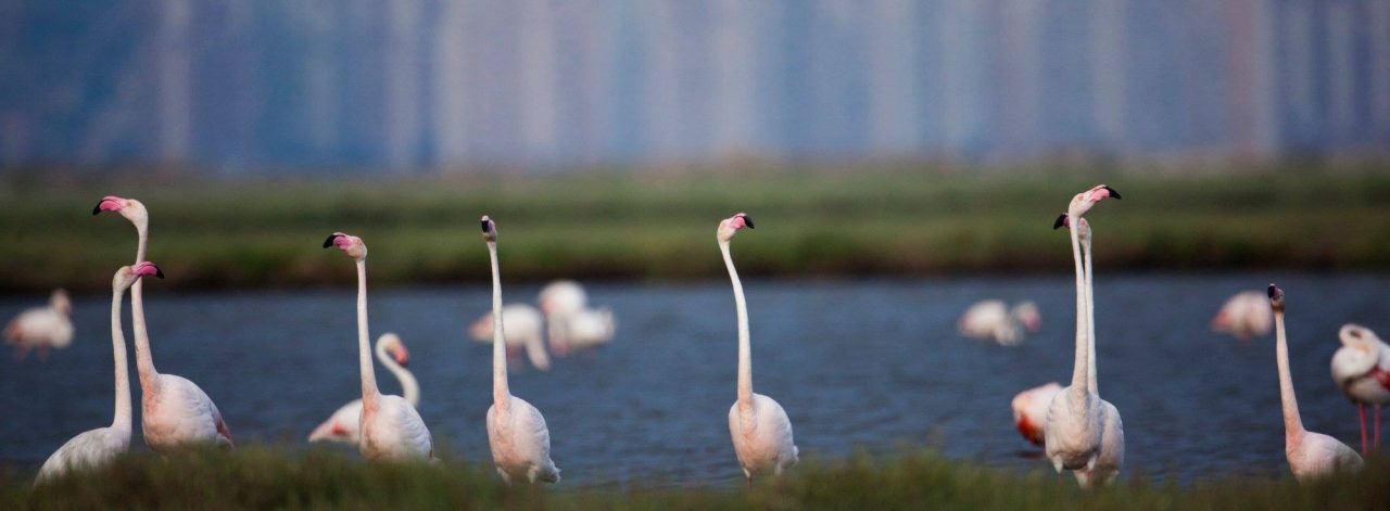 Gediz Delta Saved From Major Highway Construction