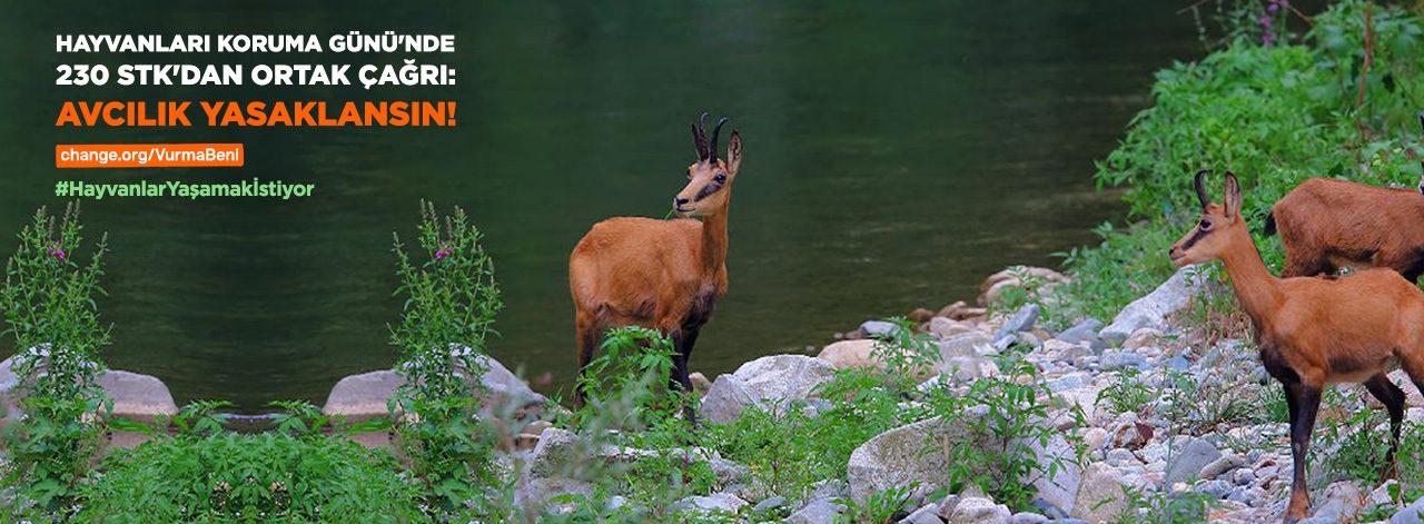 Hayvanları Koruma Günü'nde 230 STK'dan Ortak Çağrı!