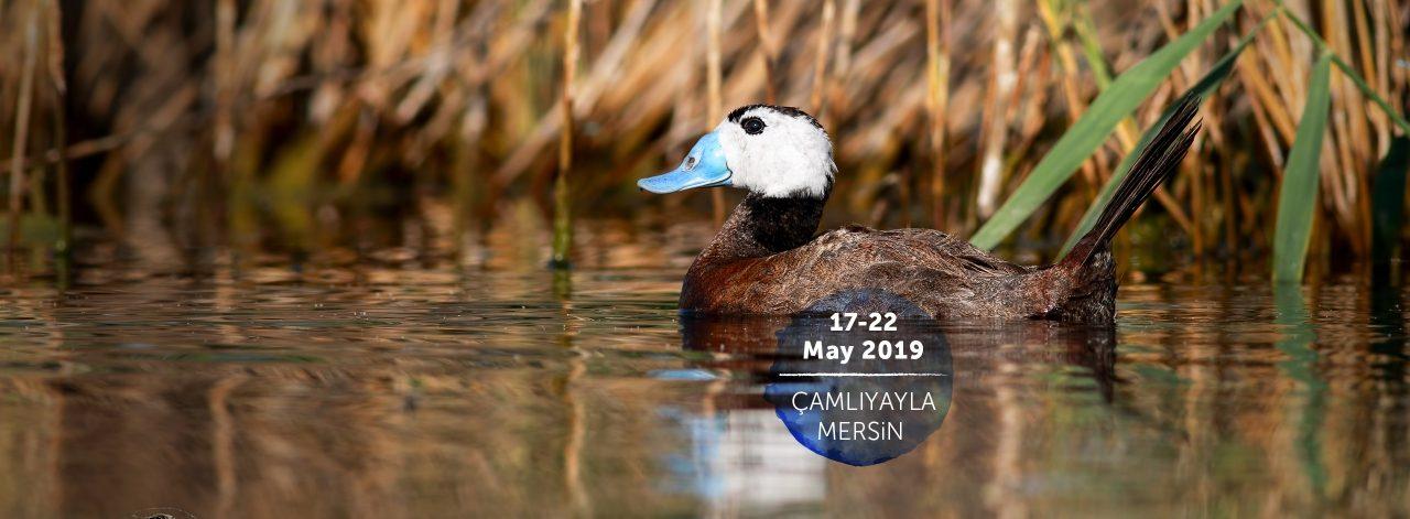 19. Türkiye Kuş Konferansı