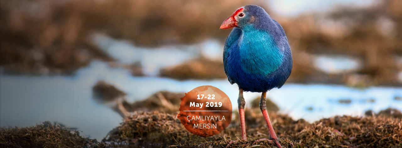 19th Turkey Bird Conference