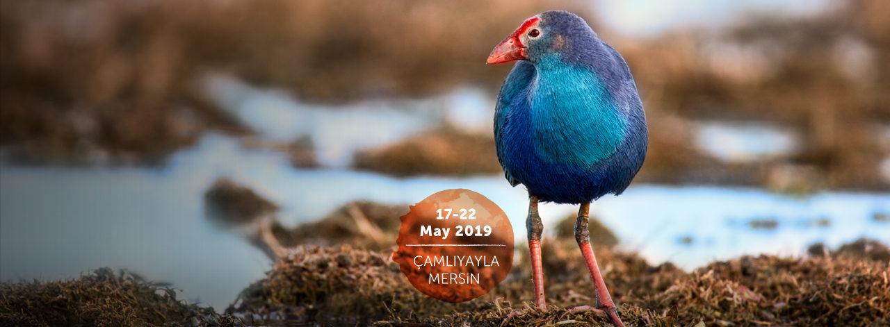 19th Turkey Bird Conference