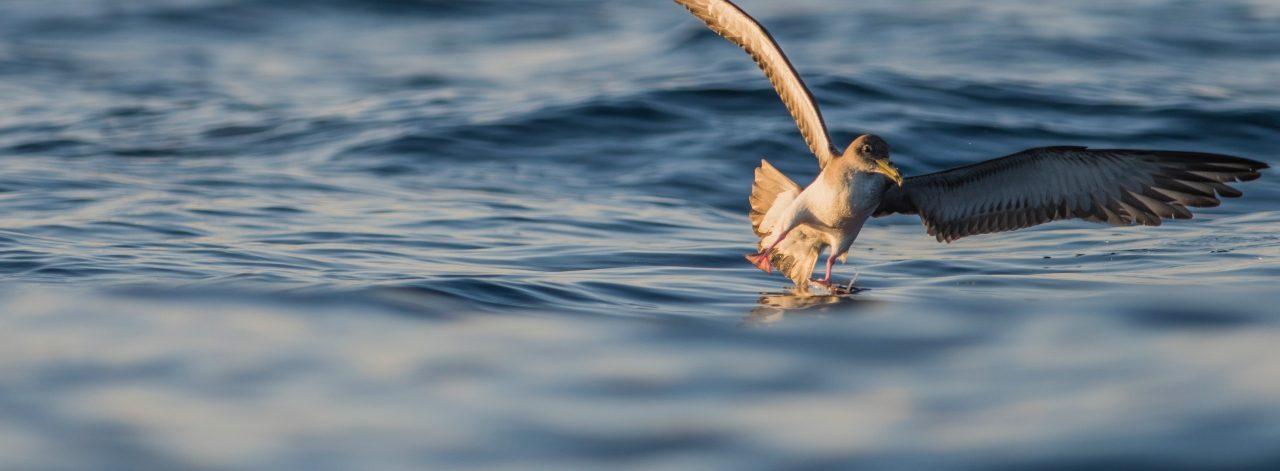Deniz Kuşları Sorumlusu