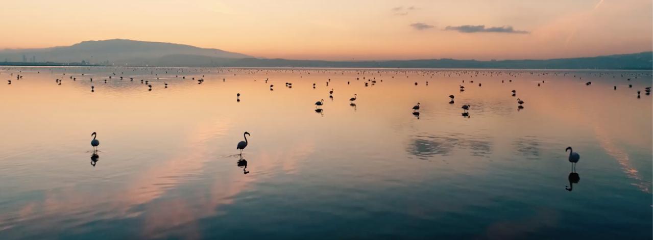 Tarkan'dan İzmir'in Gediz Deltası'nın UNESCO Dünya Doğa Mirası Olması İçin Destek