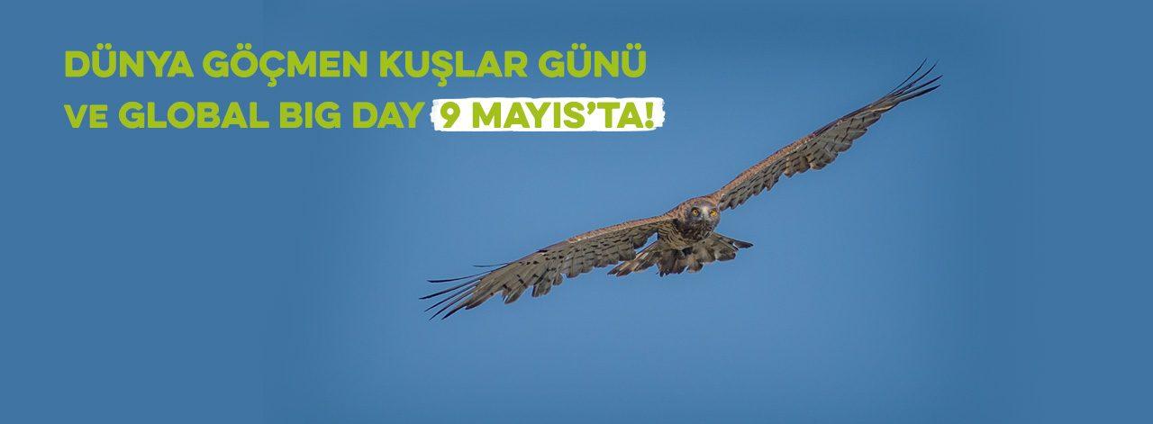 Dünya Göçmen Kuşlar Günü ve Global Big Day 9 Mayıs'ta