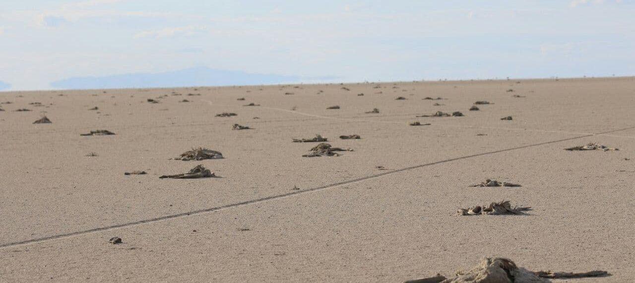 Sivil Toplum Kuruluşlarından Tuz Gölü ve Flamingolar hakkında ortak açıklama