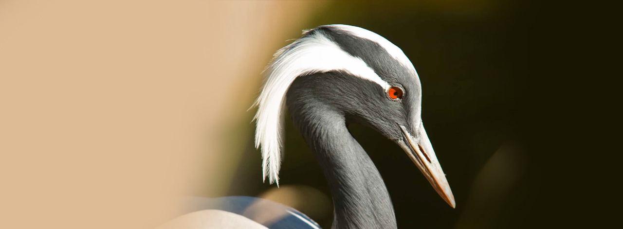 Kuşların Yok Oluş Raporu Açıklandı
